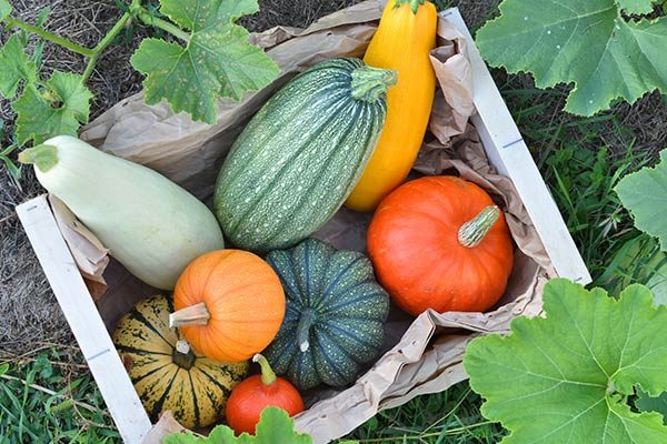 barthet-culture-gers-courges-bio